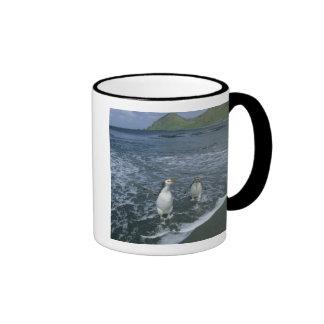 Royal Penguin, (Eudyptes schlegeli), returning Coffee Mugs