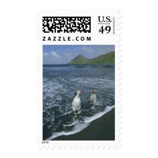 Royal Penguin Eudyptes schlegeli returning Stamp