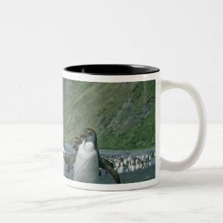 Royal Penguins (Eudyptes schlegelii) endemic, Two-Tone Coffee Mug