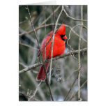 Royal Red Cardinal Greeting Card