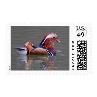 Royal Reflection Stamp