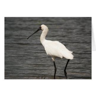 Royal Spoonbill Greeting Card