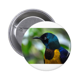 Royal Starling Pinback Button