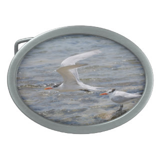 Royal Tern Oval Belt Buckles