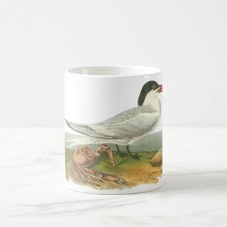 Royal Tern, John Audubon Coffee Mugs