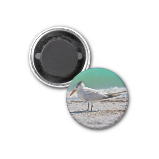 Royal Tern Magnet