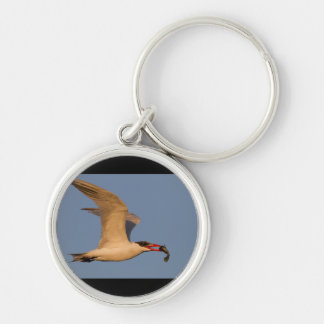Royal Tern with Fish Keychain