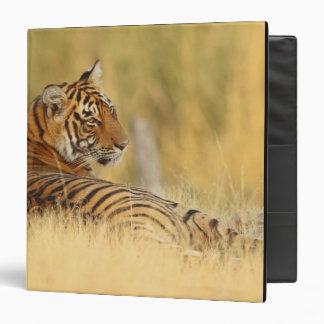 Royale Bengal Tiger sitting outside the Binder