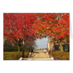 RPI red maples Card