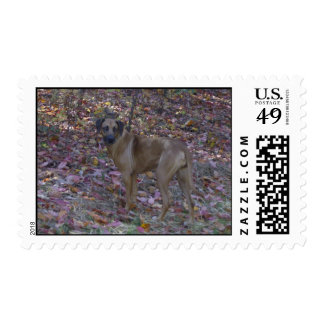 RRUS STAMPS