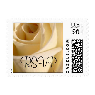 RSVP Cream Rose Wedding Postage Stamp (Square)