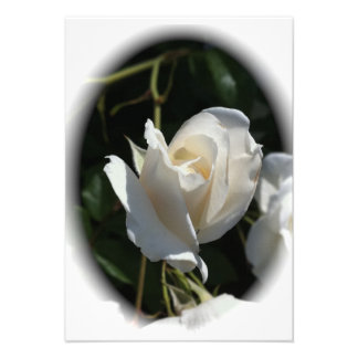 RSVP Guest Reply Card White Rose Enclosure Custom Invite