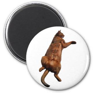 Rub My Tummy 2 Inch Round Magnet