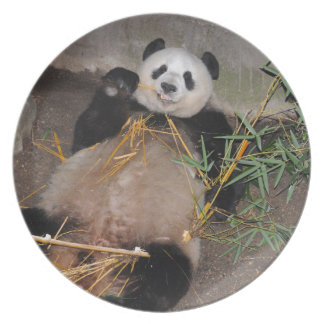 Rub my Tummy Panda Bear Dinner Plate