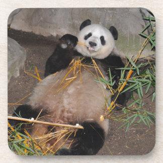 Rub my Tummy Panda Bear Drink Coaster