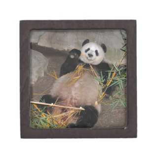 Rub my Tummy Panda Bear Gift Box