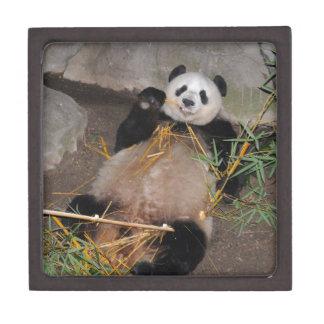 Rub my Tummy Panda Bear Jewelry Box