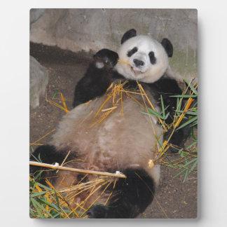 Rub my Tummy Panda Bear Plaque