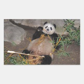 Rub my Tummy Panda Bear Rectangular Sticker
