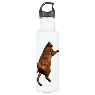 Rub My Tummy Water Bottle