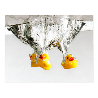 Rubber Ducks Postcard