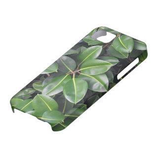 Rubber Tree Closeup iPhone SE/5/5s Case