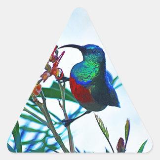Rubí del colibrí throated pegatina triangular
