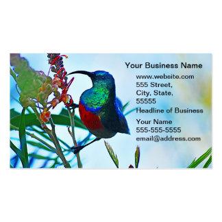 Rubí del colibrí throated plantillas de tarjetas de visita