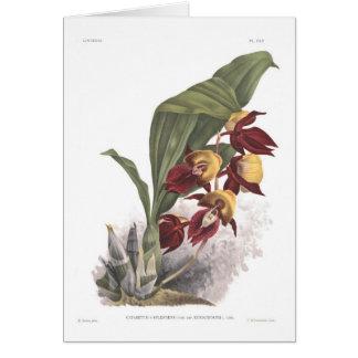 Rubiginosum del var de los splendens del Catasetum Tarjetón