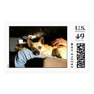 Rubio Postage Stamps