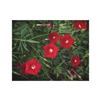 Ruby Cardinal Vine Floral Home Decor Print