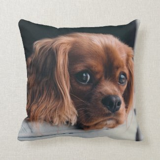 Ruby Cavalier King Charles Spaniel Dog Throw Pillow