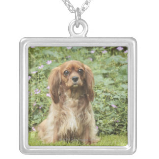 Ruby Cavalier King Charles Spaniel in the grass Silver Plated Necklace