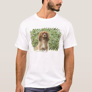 Ruby Cavalier King Charles Spaniel in the grass T-Shirt