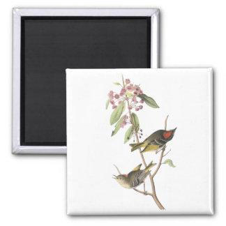 Ruby-crowned Kinglet, John Audubon Magnet