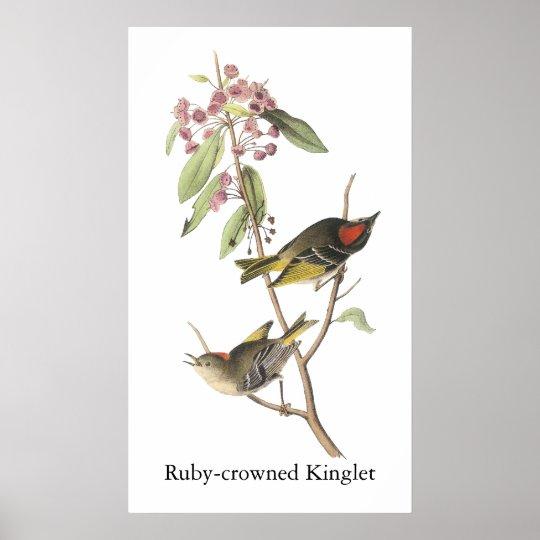 Ruby-crowned Kinglet, John Audubon Poster
