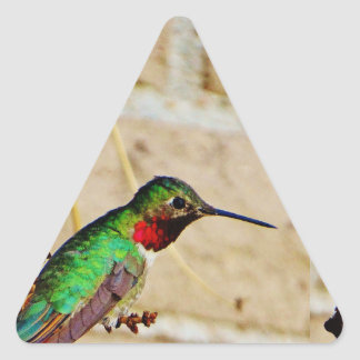 Ruby Green hummingbird Triangle Sticker