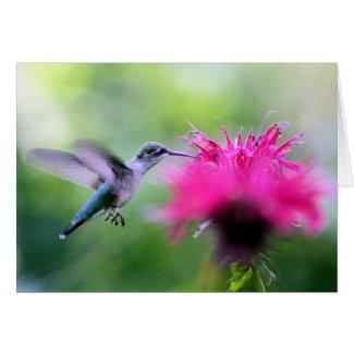 """Ruby"" Hummingbird Photography Greeting Card"
