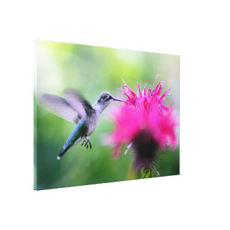 """Ruby"" Hummingbird Photography Print"