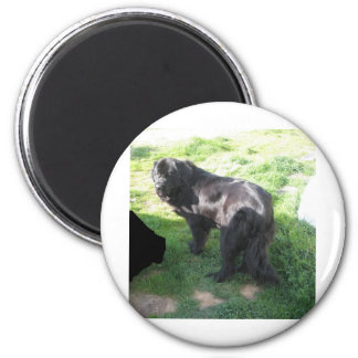 Ruby in back yard 255 2 inch round magnet