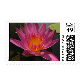 Ruby Postage Stamps