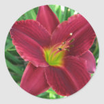 Ruby Red Daylily Sticker