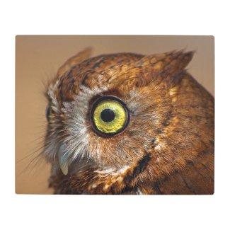 Ruby the Eastern Screech Owl Metal Print