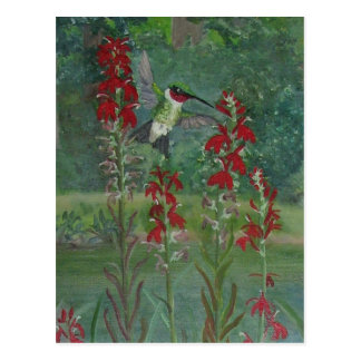 Ruby-throat and Cardinal Flower Postcard