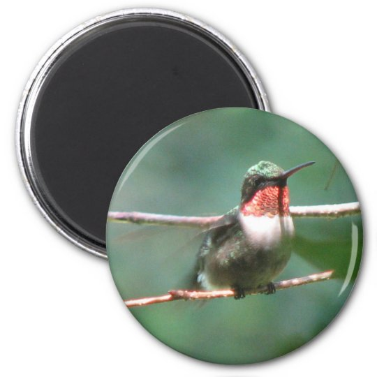 Ruby-throat Flutters Magnet