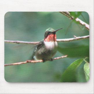 Ruby-throat Flutters Mousepad