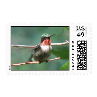 Ruby-throat Flutters Postage