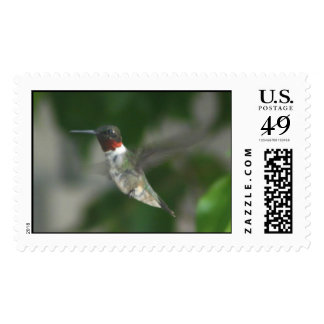 Ruby Throat Hummingbird Postage