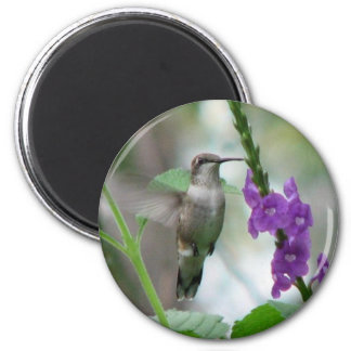 Ruby-throat Vervain Magnet