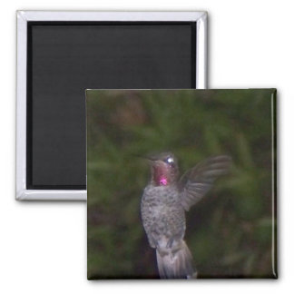 Ruby Throated Humming Bird Magnet